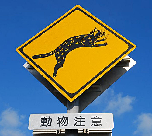 Warnung vor iriomote-Katze (https://de.wikipedia.org/wiki/Datei:Warning_signs_for_Iriomote_cat.jpg)