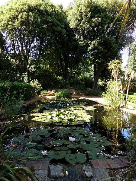 Abbotsbury Subtropical Gardens, Lily Ponds