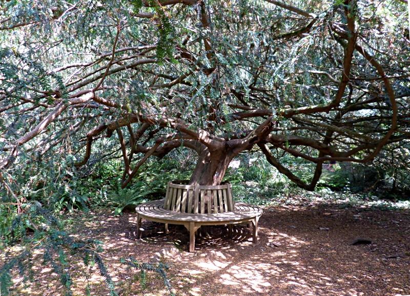 Baumbank, Subtropical Garden Abbotsbury