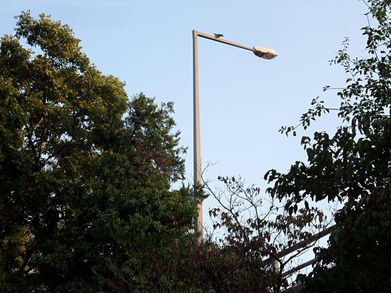 Friedhof mit Strassenlampe und Taube