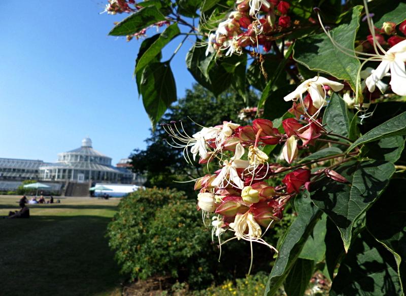 Im Botanischen Garten
