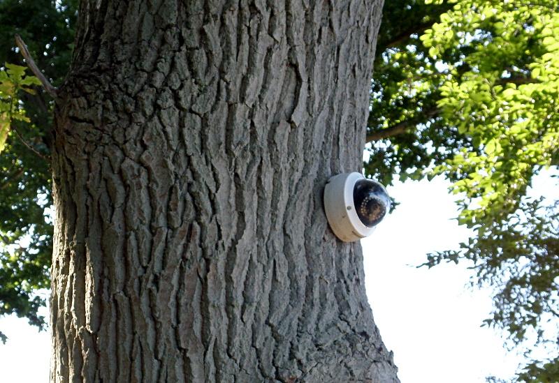Überwachungskamera an einem Baum