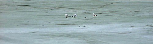 Tauben auf Eis, Schloß Belvedere