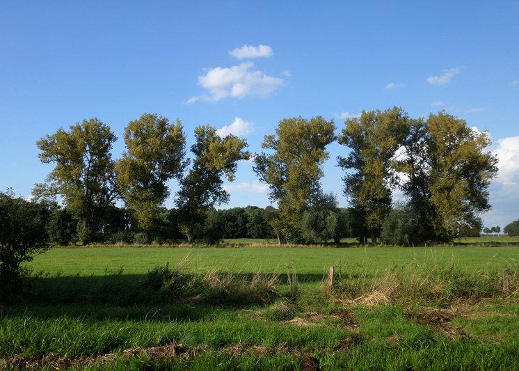 Wendlandbäume
